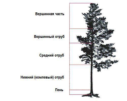 Схема пяти основных частей дерева