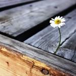 Определяем расход древесины на строительство малоэтажного дома или хозяйственной постройки