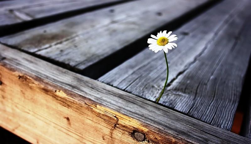 Как определить расход древесины на строительство?