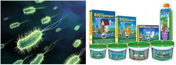 Анаэробные бактерии в жидкости