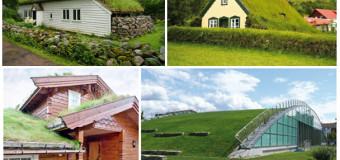 Устройство зеленой кровли — конструкция, виды, достоинства и недостатки озеленения крыши