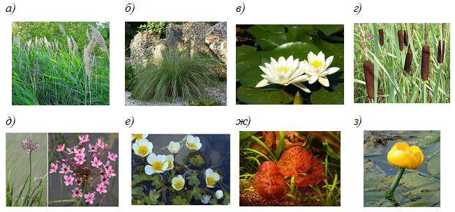 Растительность био-бассейна