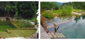 Натуральные бассейны с естественной очисткой воды — виды, конструкция, преимущества био-бассейнов