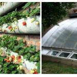 Солнечный вегетарий Иванова — устройство, преимущества, все тонкости конструкции