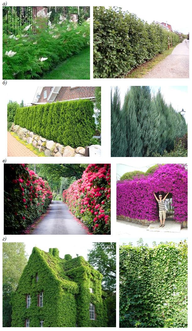 Виды живой изгороди в зависимости от вида растительности
