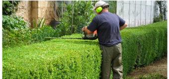 Живая изгородь: разновидности, посадка, правила обрезки и ухода