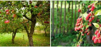 Сад и огород возле вашего дома